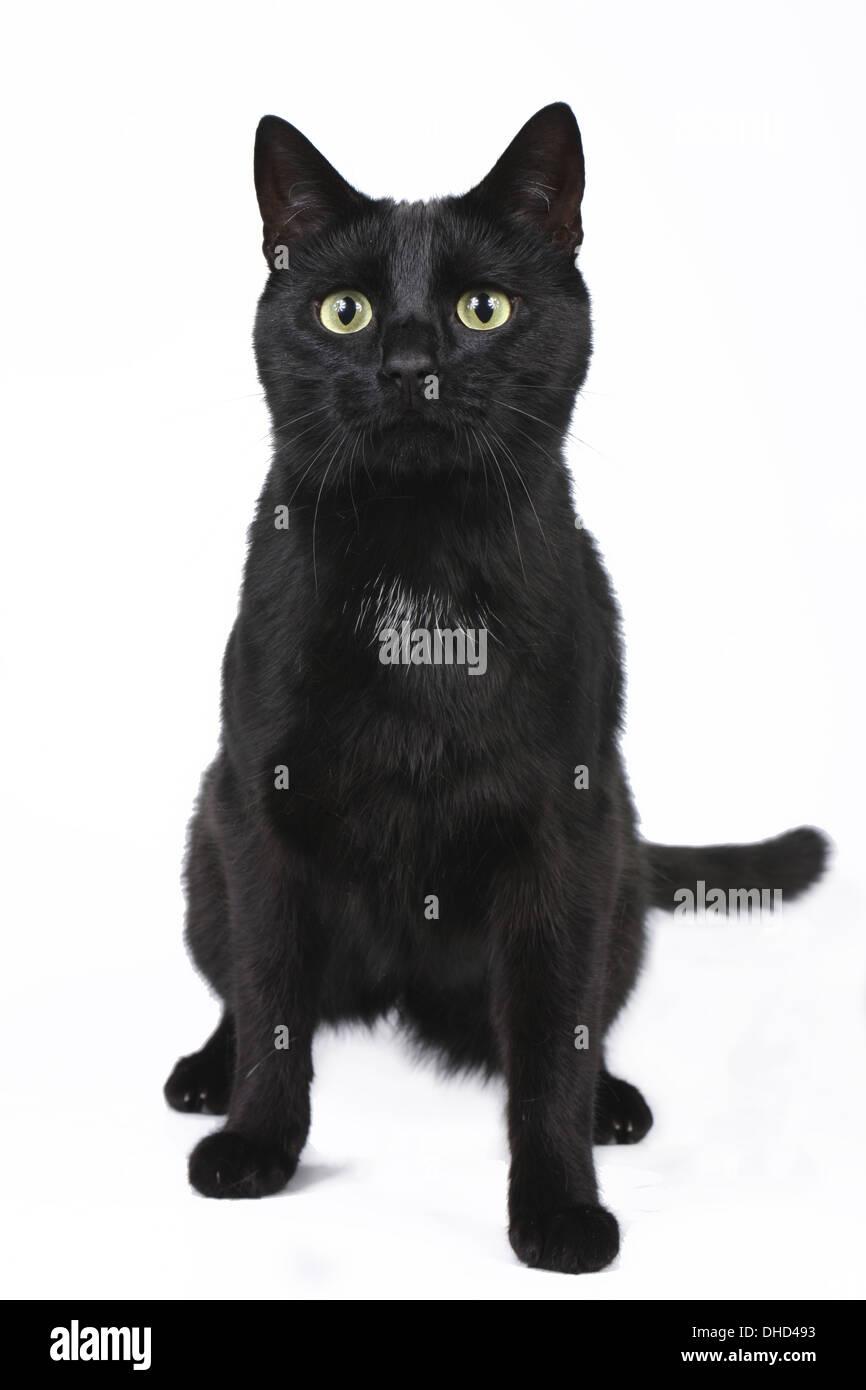 Schwarze Katze sitzend Stockbild