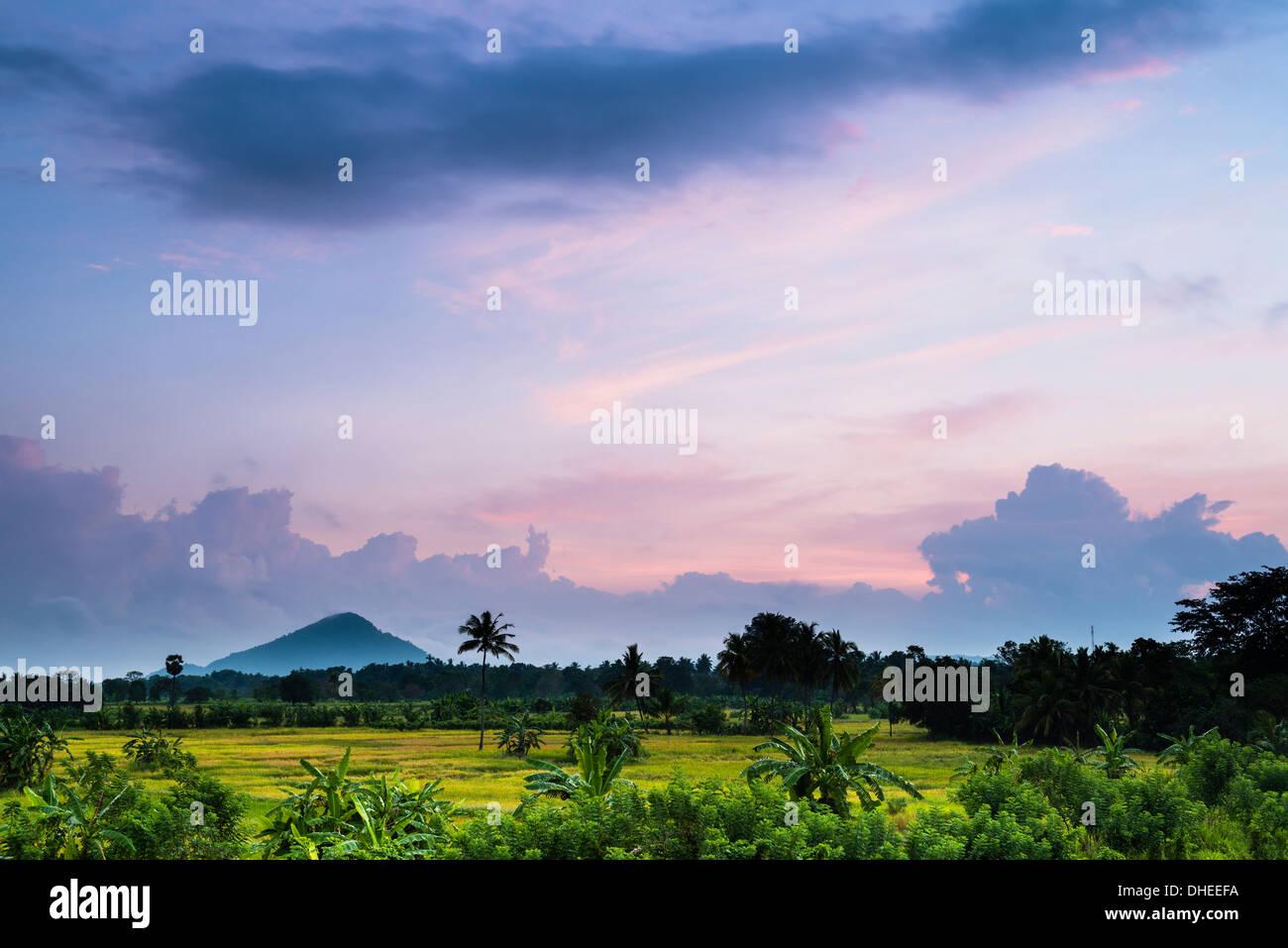 Sri Lanka-Landschaft bei Sonnenaufgang, Reisfelder in der Nähe von Dambulla, Central Province, Sri Lanka, Asien Stockbild