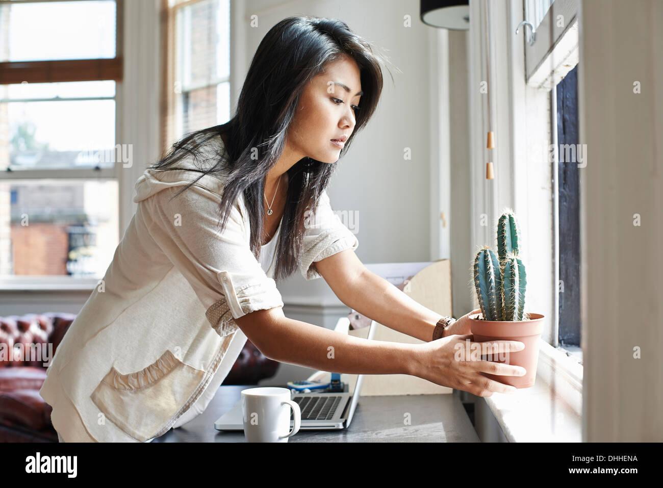 Junge Frau verschieben Kaktus Pflanze auf der Fensterbank Stockfoto