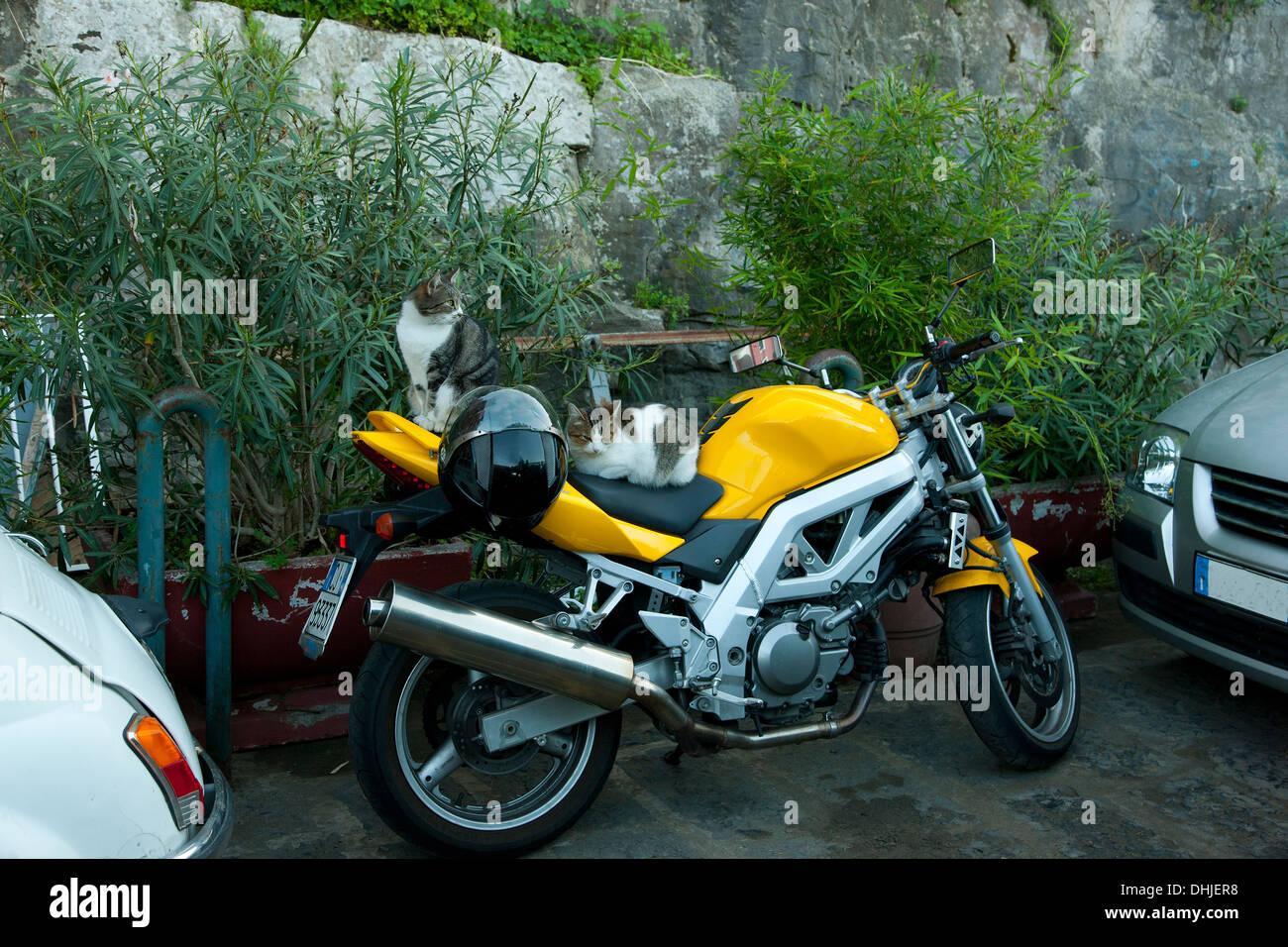 Katzen sitzen auf einem gelben Motorrad in Sorrento, Italien. Stockbild