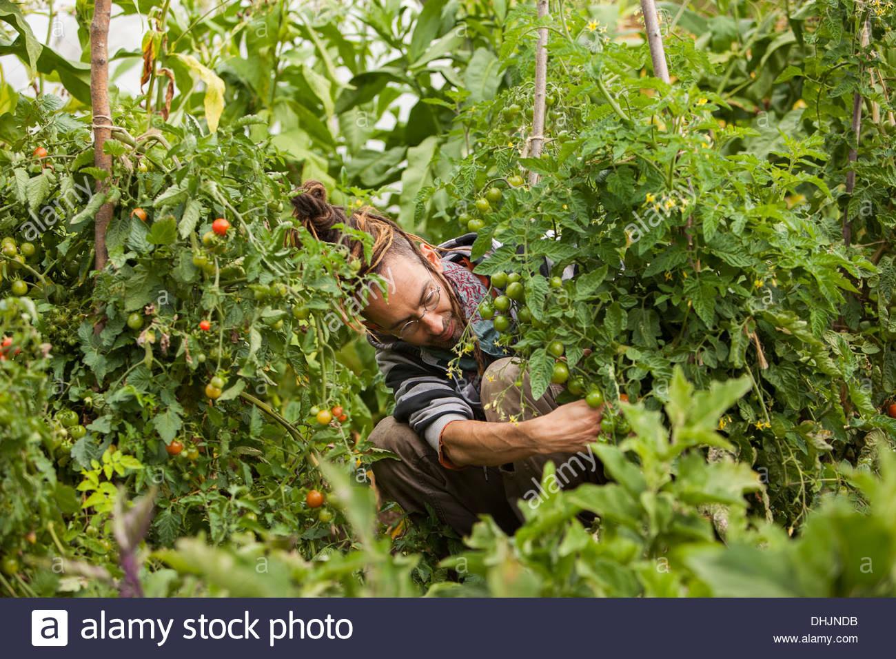 Österreich, Schiltern, Alternative Gärtner bei der Arbeit Stockbild