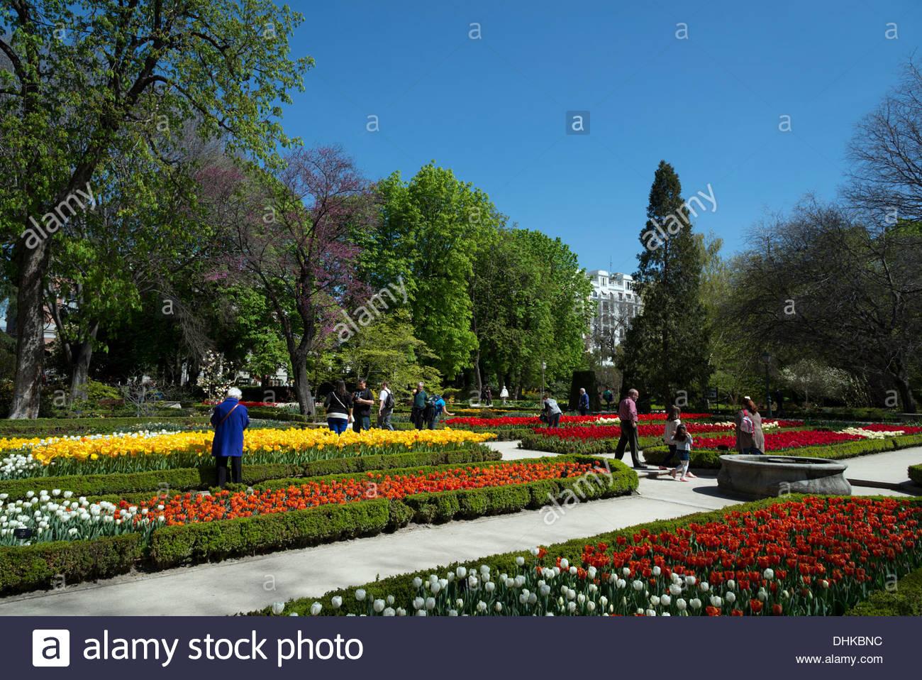 Tulpen in die Royal Botanical Gardens, Madrid, Spanien Stockbild
