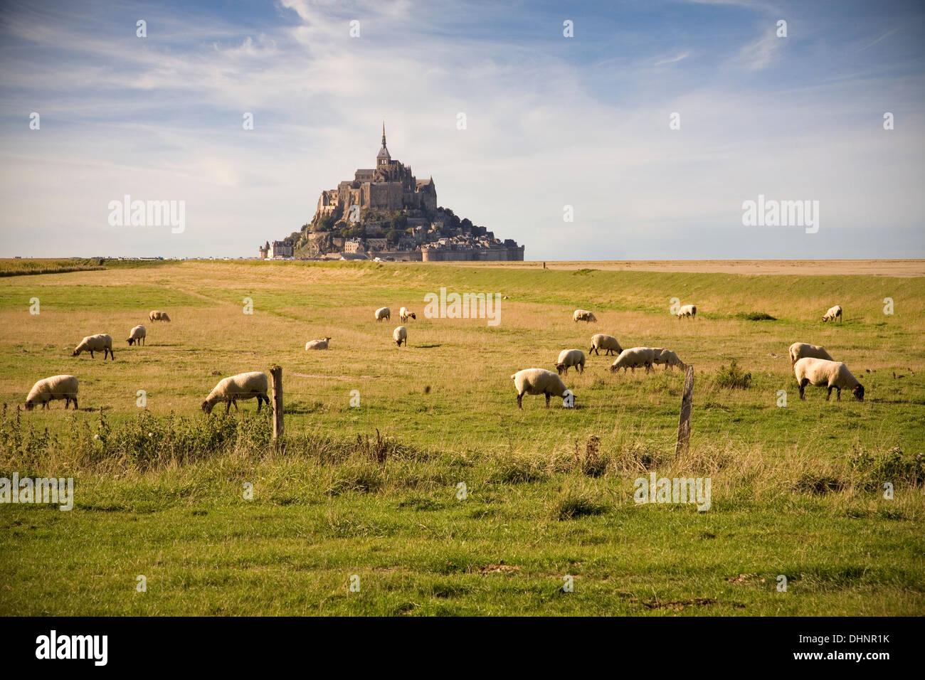 Le Mont Saint-Michel und Schafe auf der Weide Stockfoto