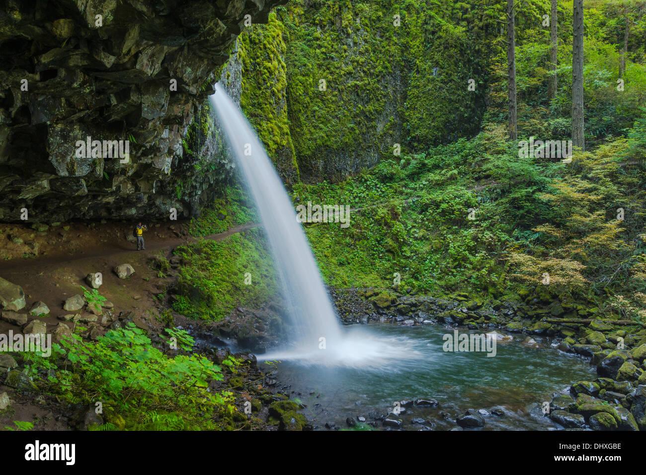 Wanderer hinter Pferdeschwanz fällt (aka Upper Schachtelhalm Falls), Columbia River Gorge National Scenic Area, Stockbild