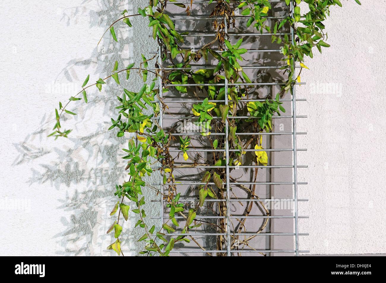 Metal Trellis Stockfotos & Metal Trellis Bilder - Alamy
