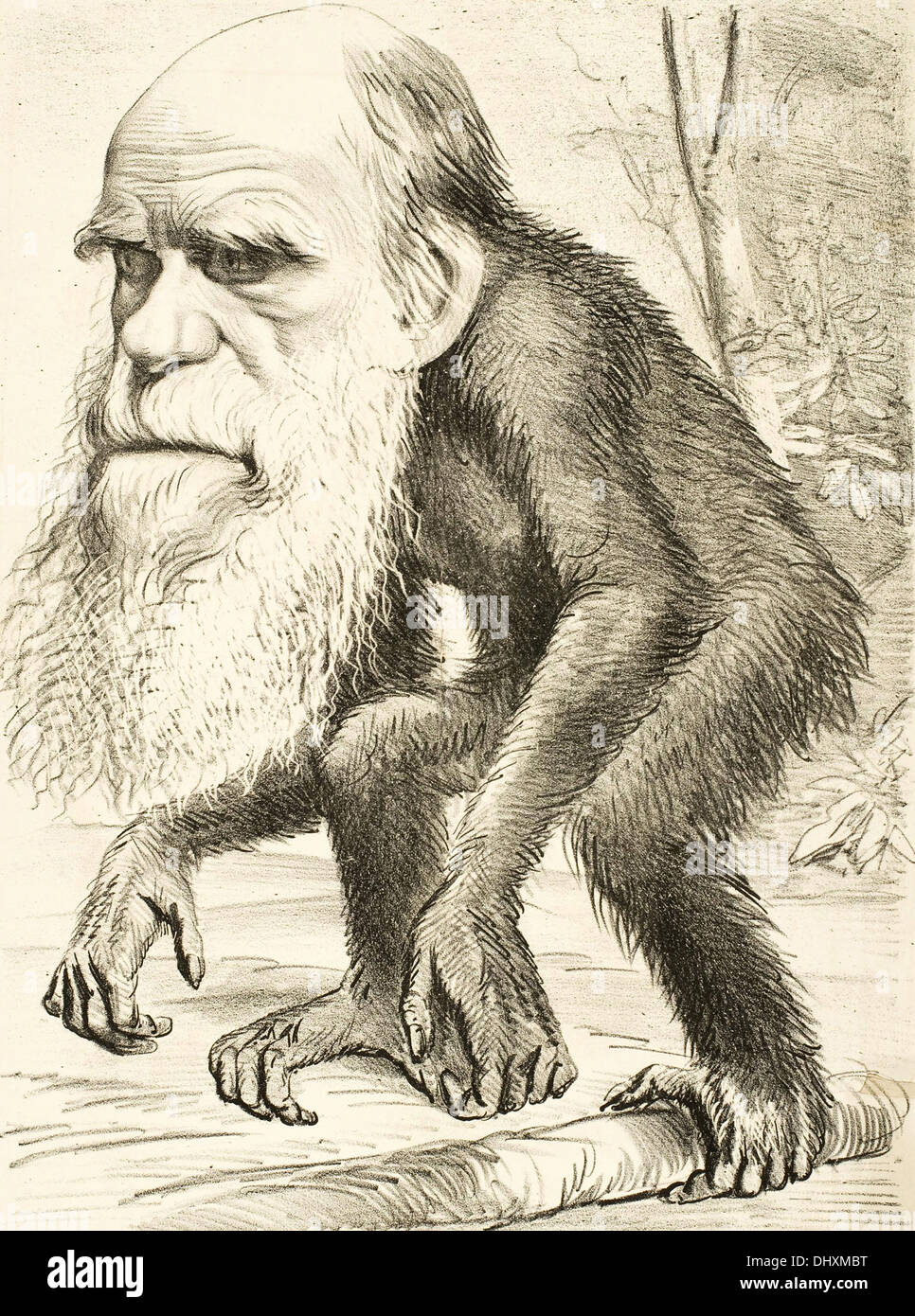 Cartoon von Charles Darwin 1871 Stockbild