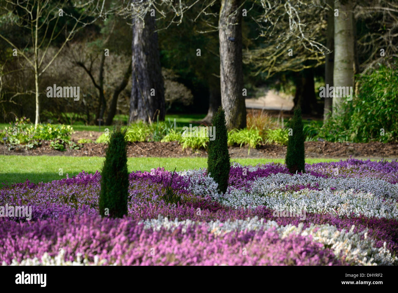 erica carnea heidekraut wei e blume garten pflanze winter. Black Bedroom Furniture Sets. Home Design Ideas