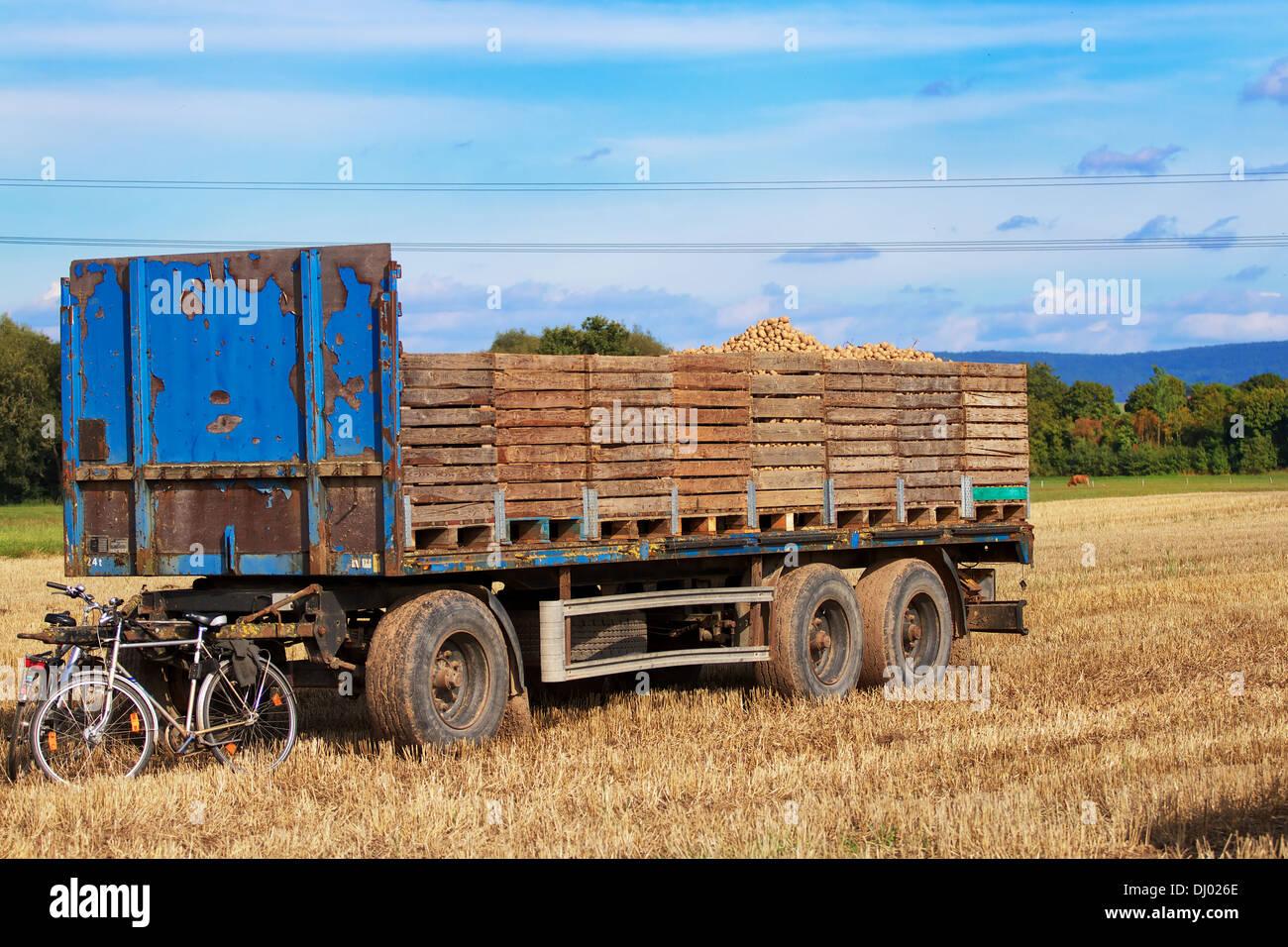 Ein Anhänger mit kartoffelkisten in einem Acker, der Anhänger Deichsel lehnen Fahrräder. Stockbild