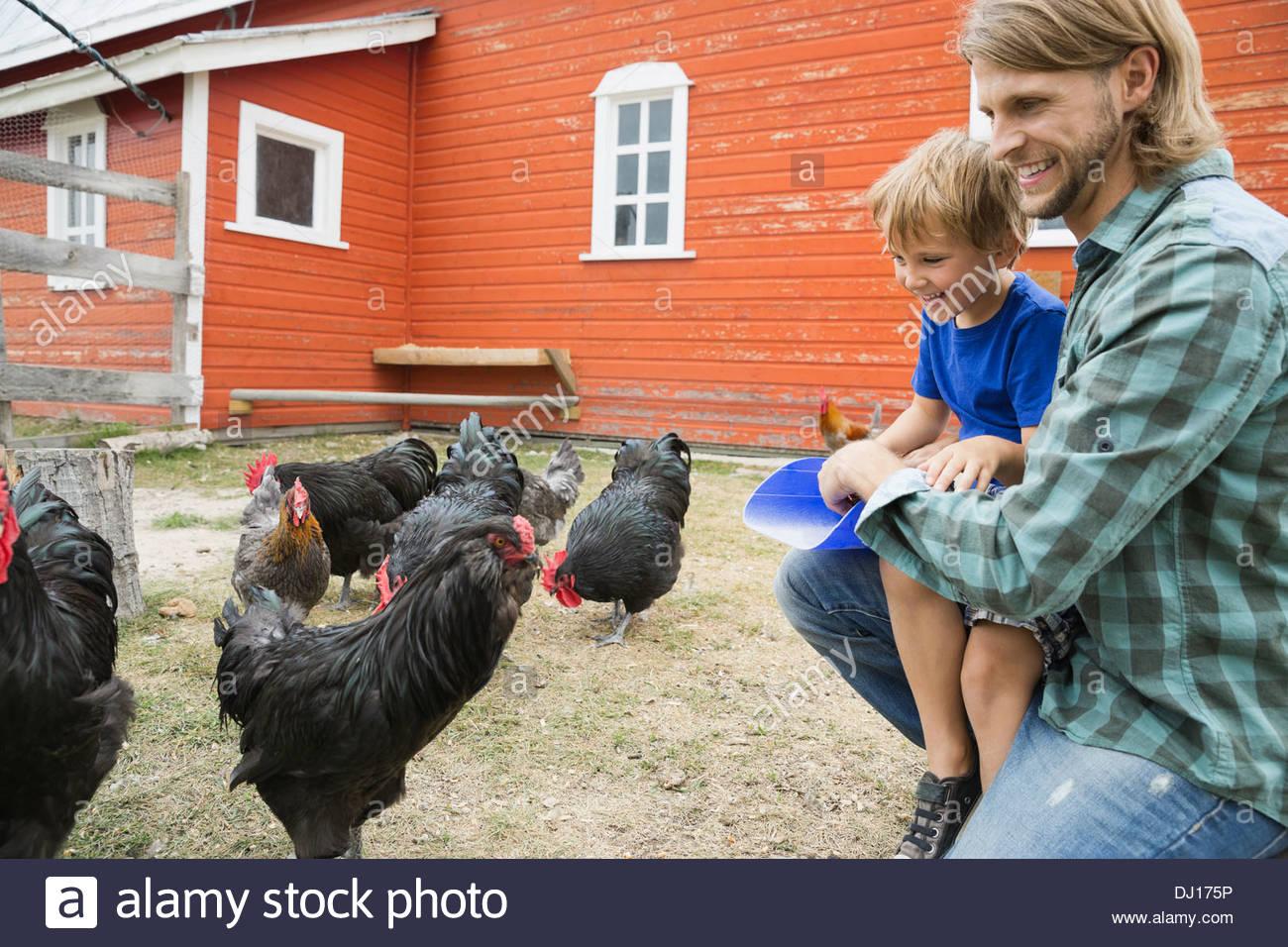 Vater und Sohn auf Bauernhof Hühner füttern Stockbild