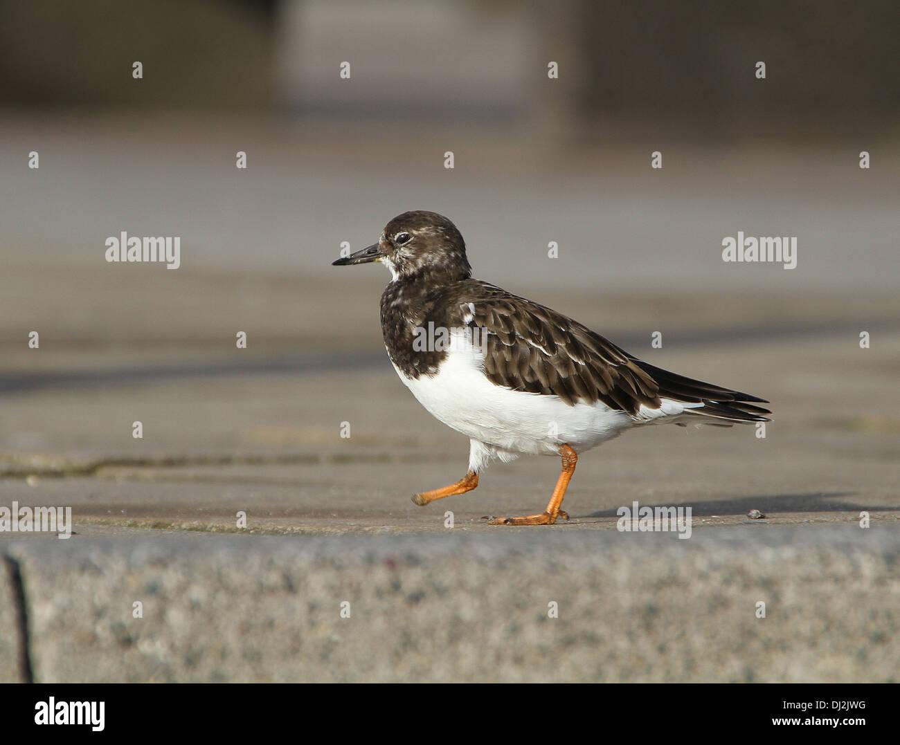 Fantastisch Vogel Fußanatomie Fotos - Menschliche Anatomie Bilder ...