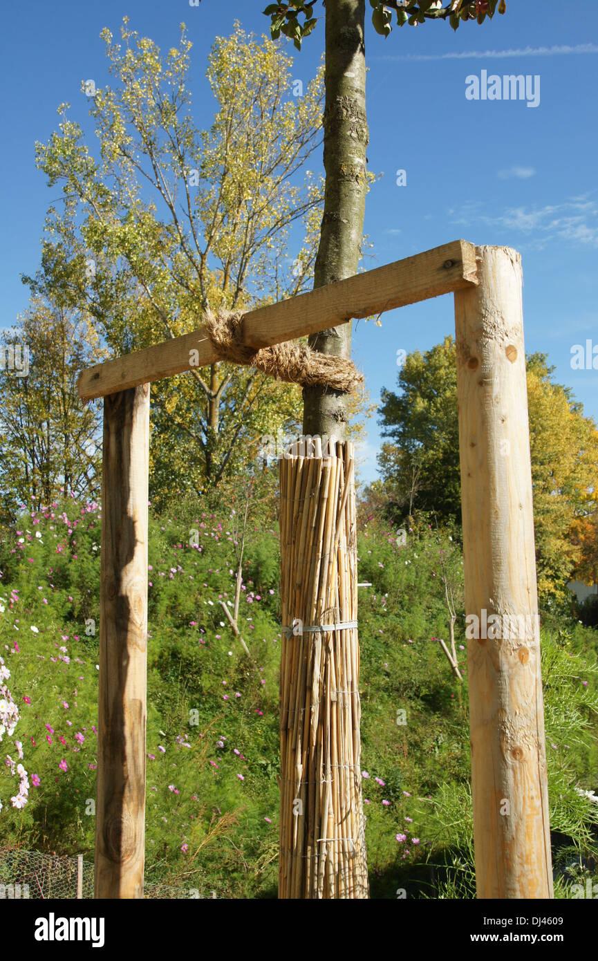 Baum Pfählen, Binden, Stammschutz Stockbild