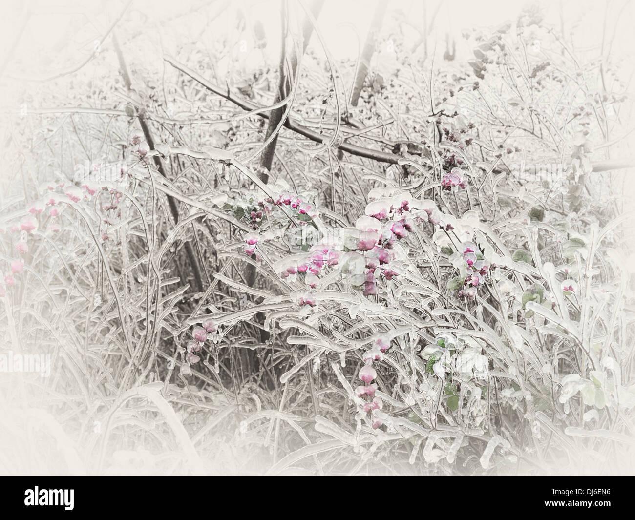 Gefroren, glasiert Eis Zweigen und rosa Beeren eines Strauches. Abstrakt Sepia getönten Herbst Natur Landschaft. Stockbild