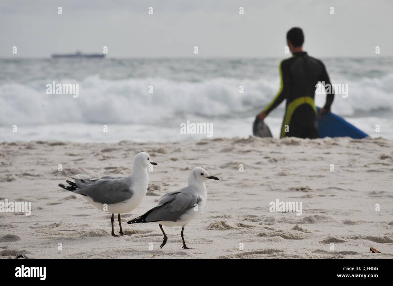 13. Juni 2010 Fuß - Cape Town, SOUTH AFRICA - Möwen am Strand von Camps Bay Vorort von Kapstadt Sonntag, 13. Juni 2010 in Südafrika. (Kredit-Bild: © Mark Sobhani/ZUMApress.com) Stockfoto