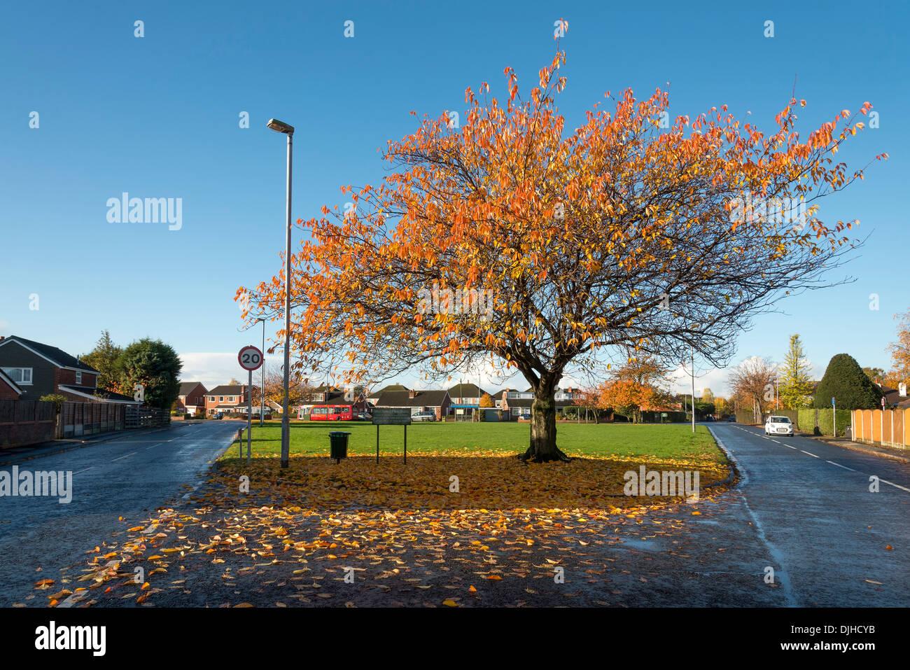 Bluhende Kirschbaume Baum Verliert Blatter Im Herbst Stockfoto Bild