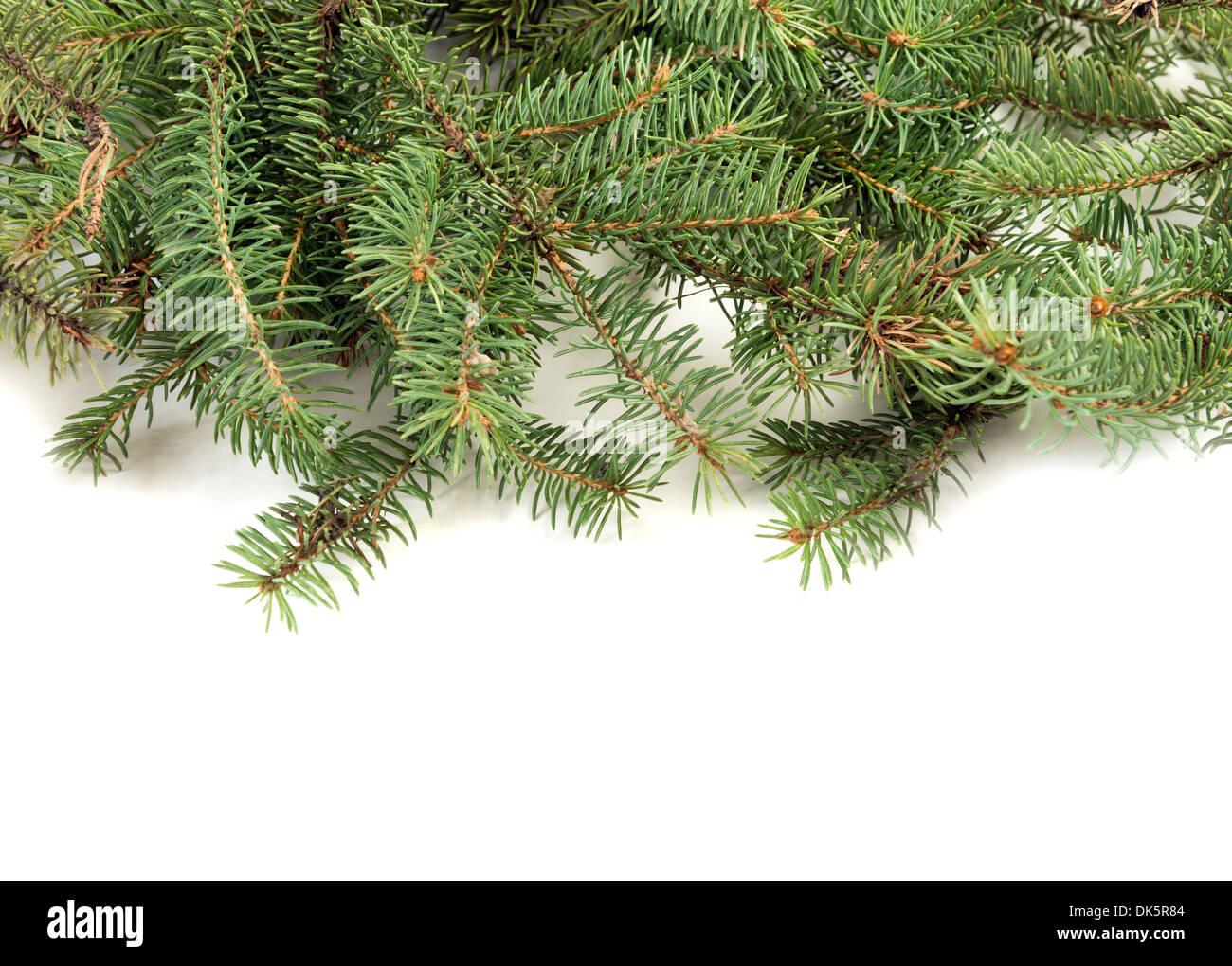 Baum Tannenzweig Weihnachtsdekoration Stockbild