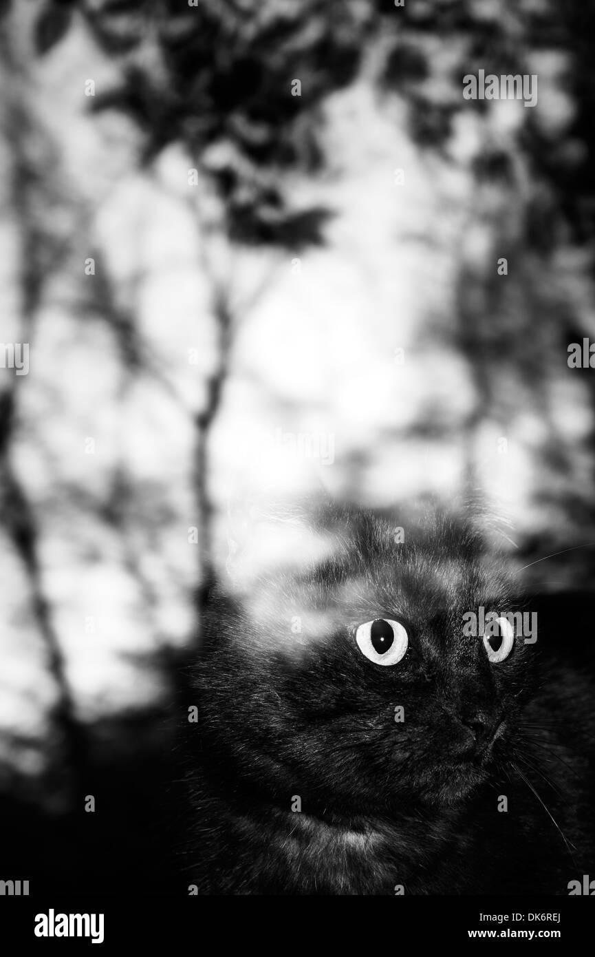 Schwarze Katze Katze hinter dem Fensterglas schauen Stockbild