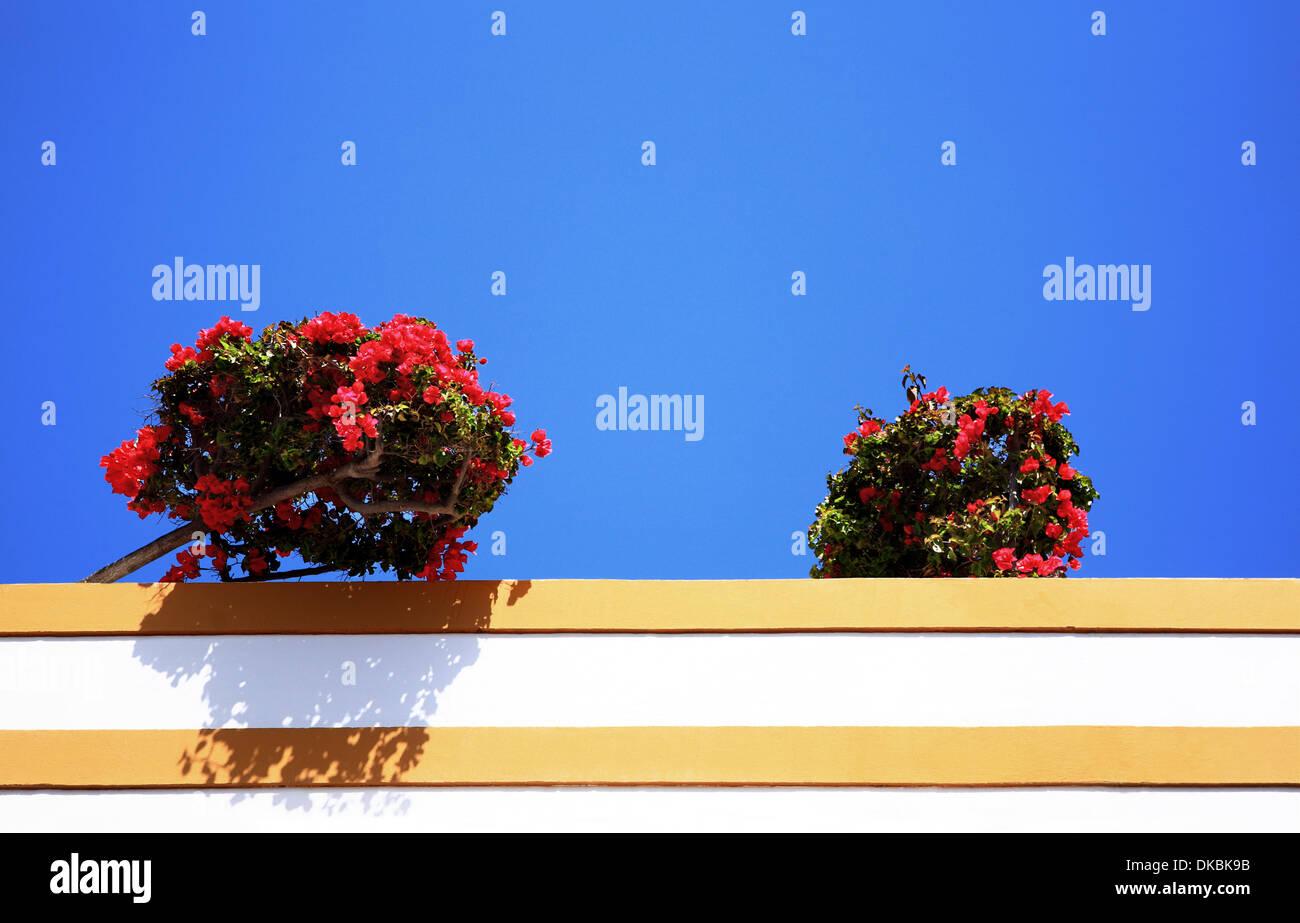 Blumen auf dem Dach, Puerto de Mogán, Gran Canaria, Kanarische Inseln, Spanien Stockfoto