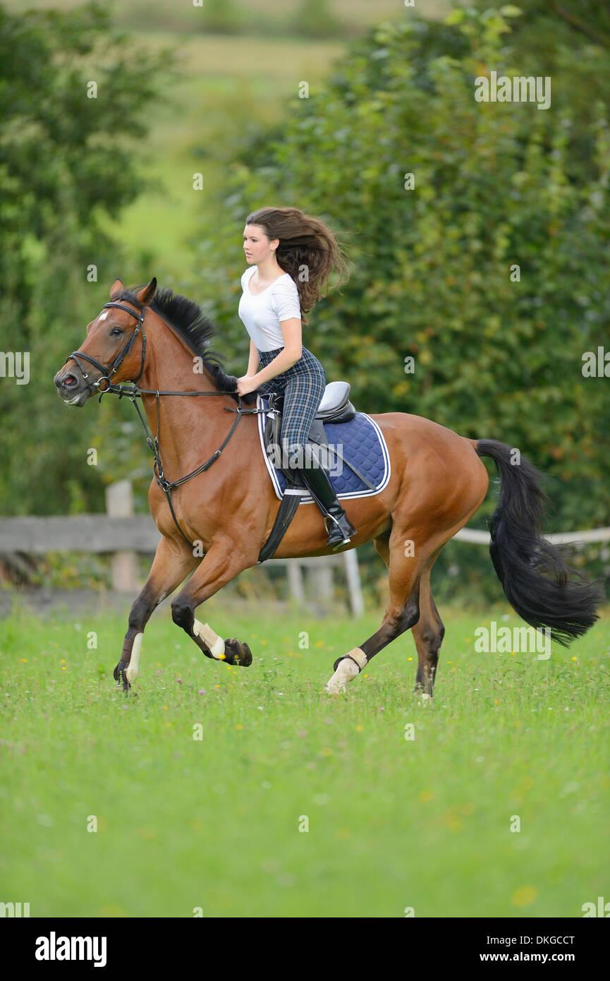 teenagermädchen auf einem mecklenburger pferd auf einer