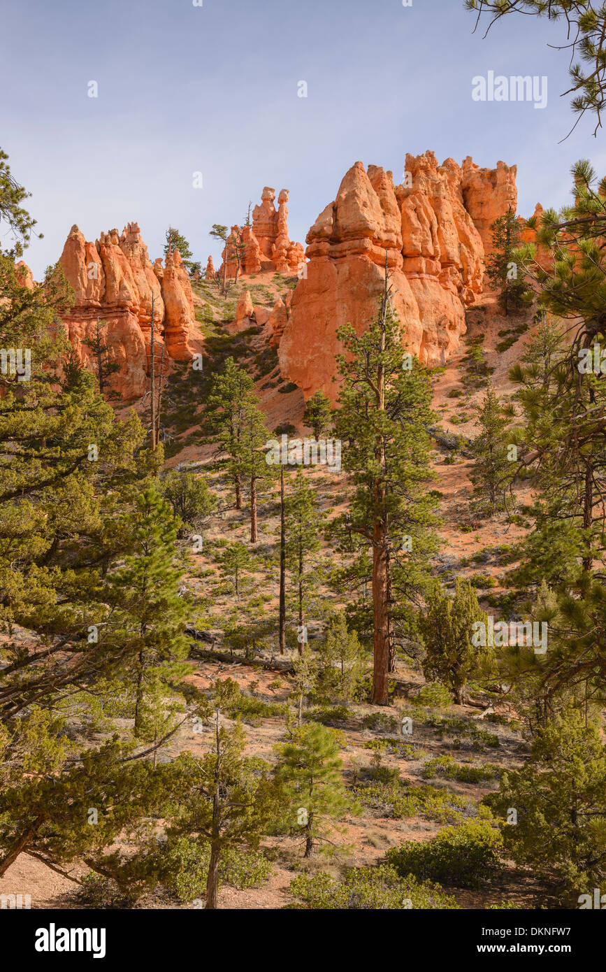 Bryce Canyon Navajo Loop Trail, Bryce-Canyon-Nationalpark, Utah, USA Stockfoto
