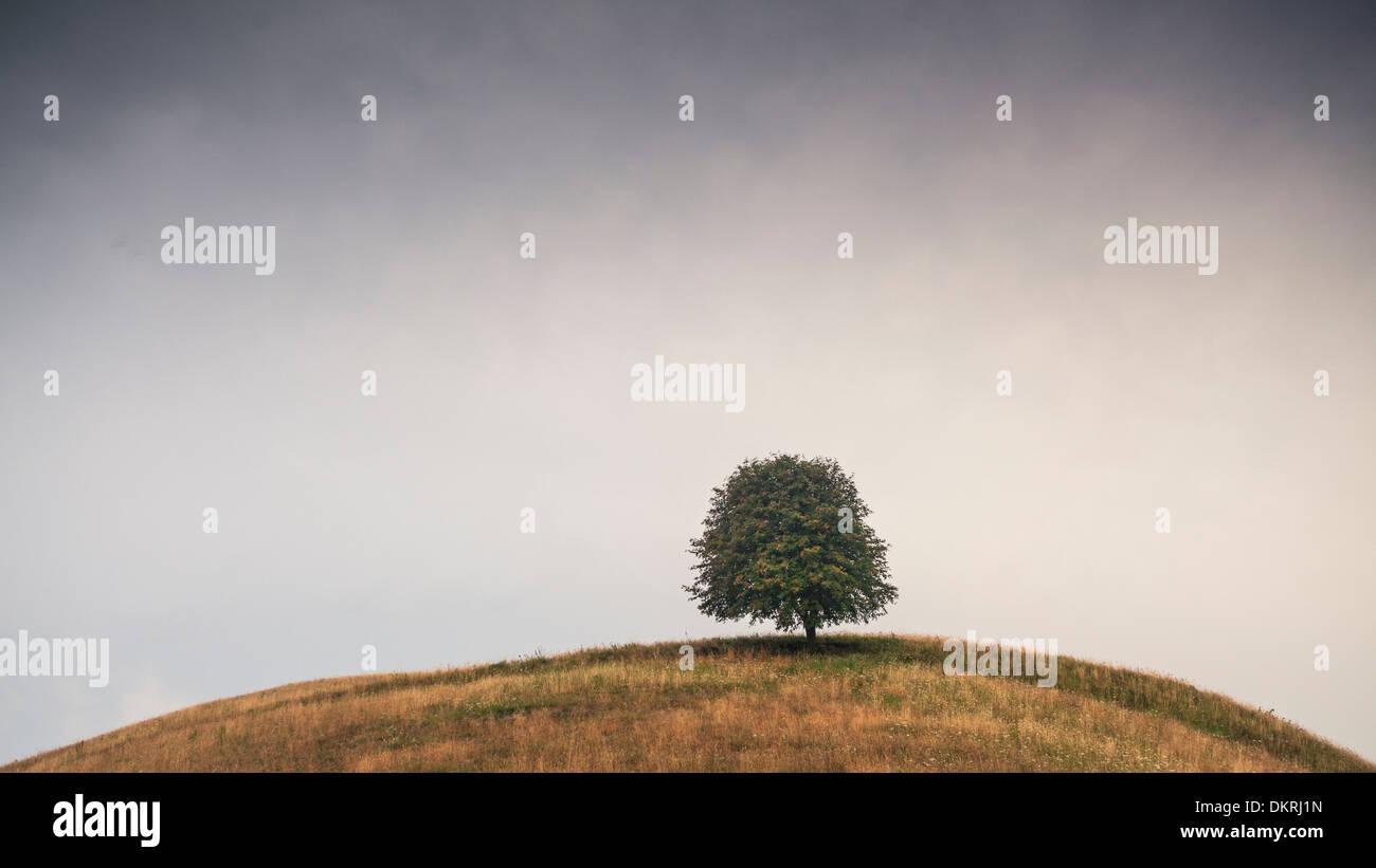 Baum auf Hügel, Groß Zicker, Gager, Halbinsel Moenchgut, Insel Rügen, Mecklenburg-Vorpommern, Deutschland Stockbild