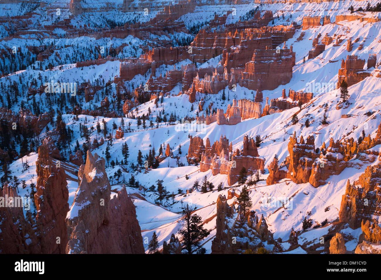 die Hoodoos im Winter, Bryce Canyon, Utah, USA Stockbild