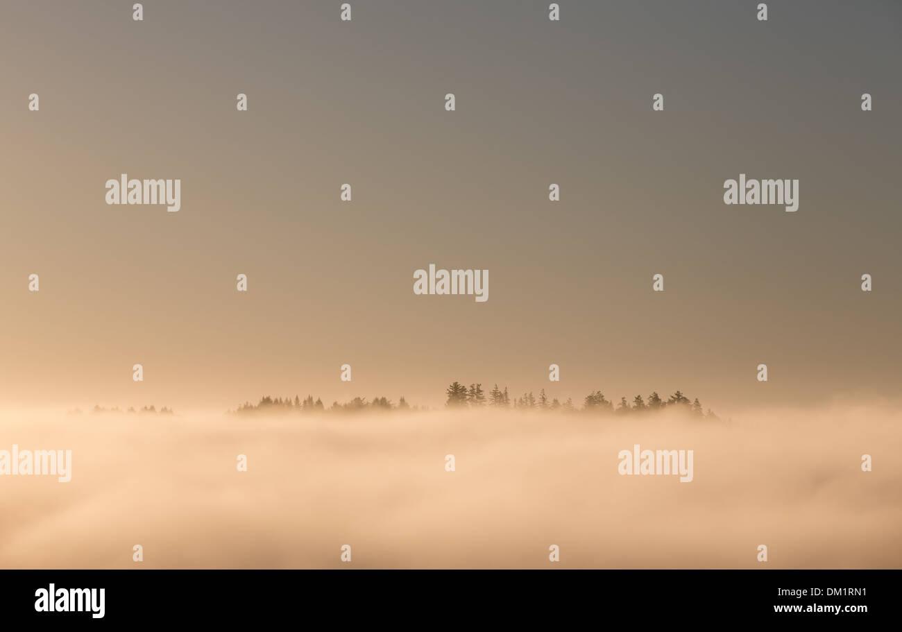 Bäume-Blick aus Nebel, Sonoma County, Kalifornien, USA Stockbild
