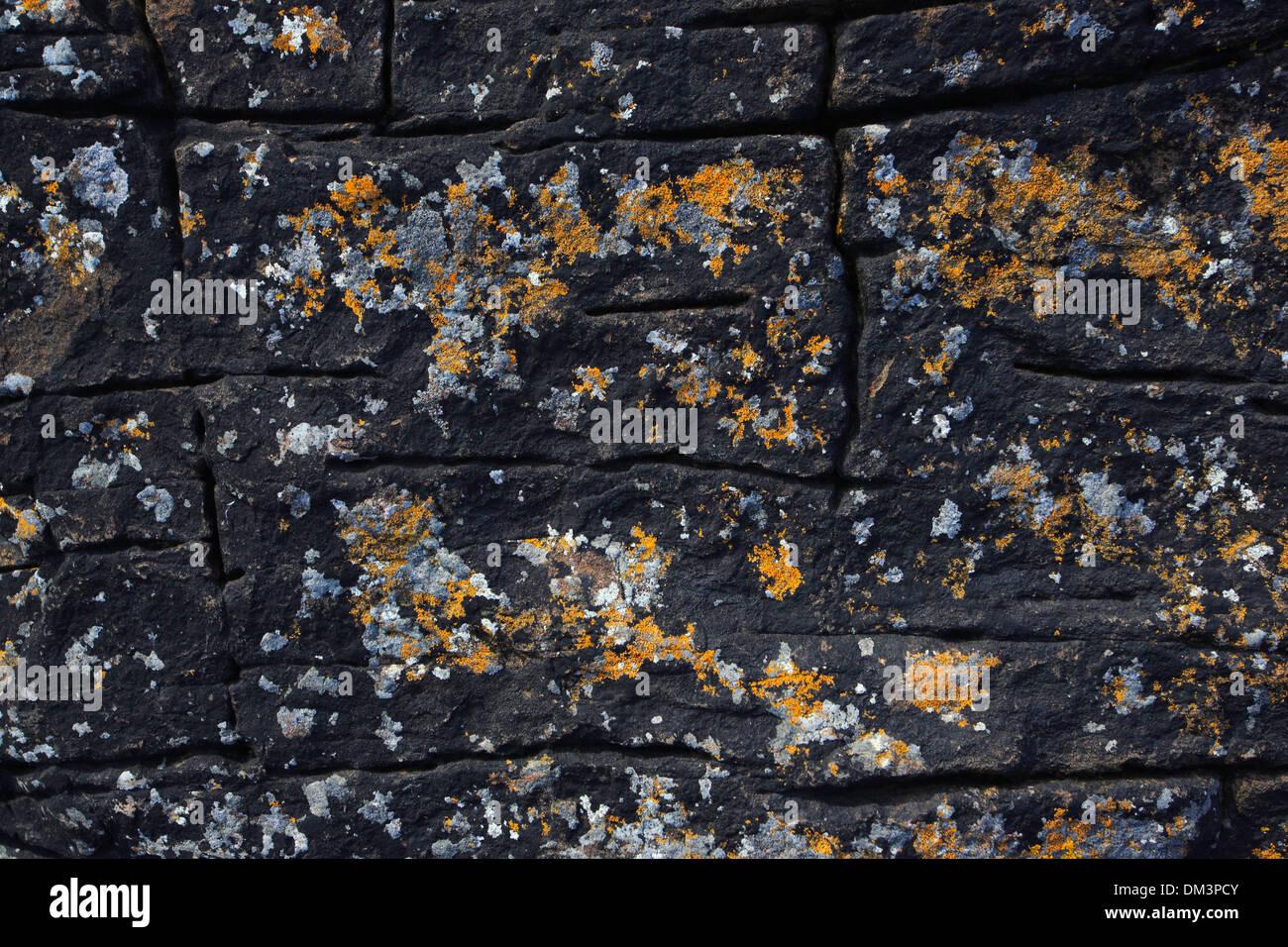 Detail, Steilküste, Küste, Muster, Schottland, Stein, abstrakte, bunten, grafischen, Orange, Flechten, Stockbild