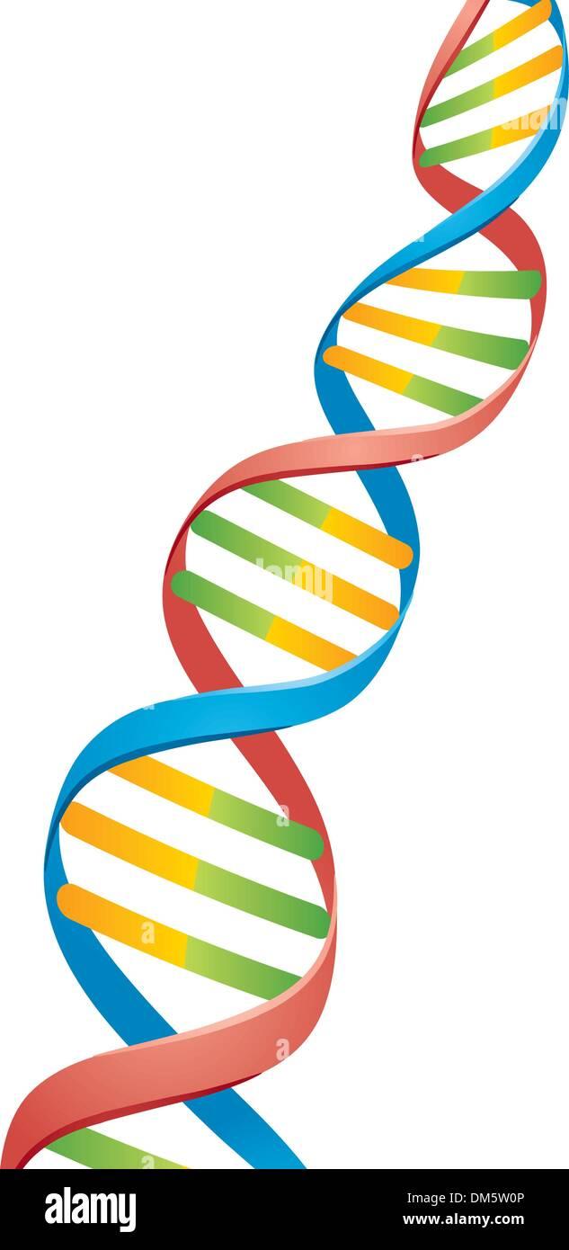 Doppel-Helix DNA-Strang Stockbild