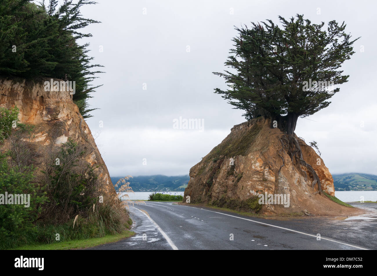 Natürliche Eigenschaft an der Portobello Road, Portobello, in der Nähe von Dunedin, South Otago, Südinsel, Neuseeland. Stockbild