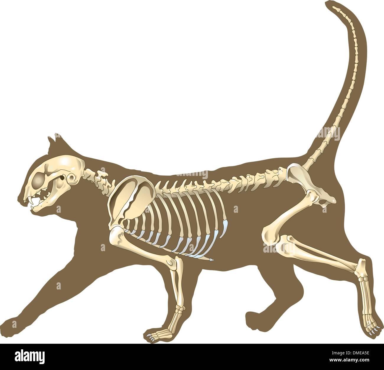 Tolle Katze Fußanatomie Galerie - Anatomie Ideen - finotti.info