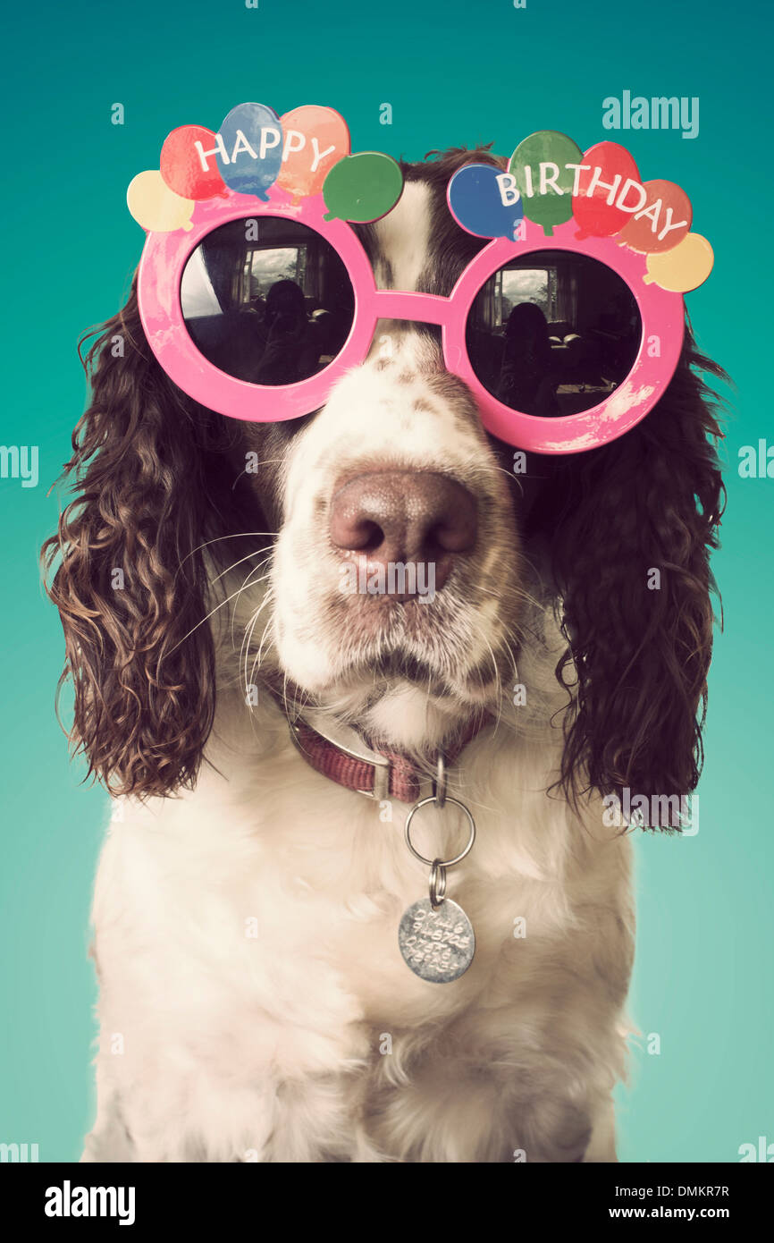 Happy Birthday Hund Mit Brille Stockbild