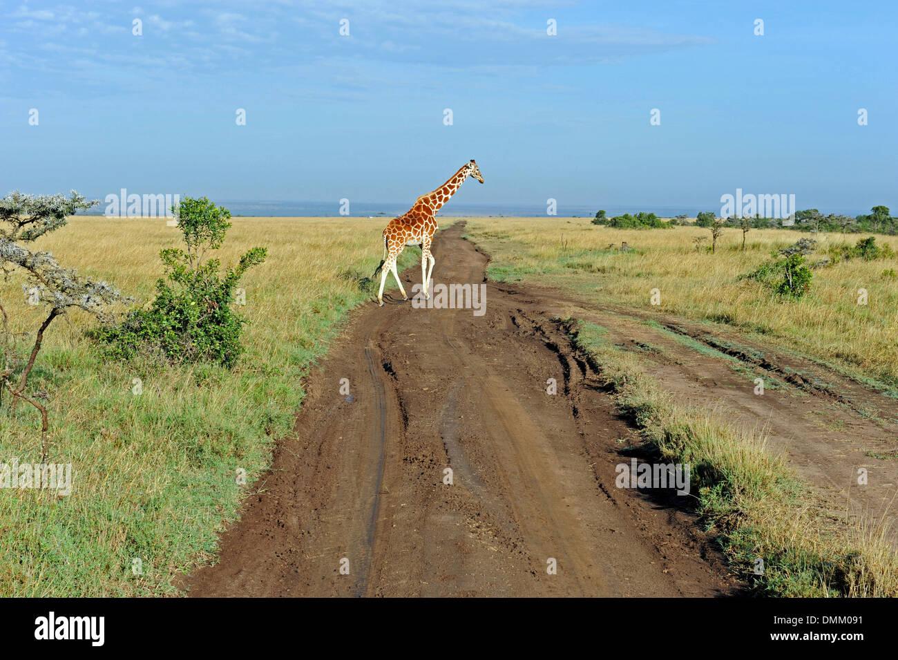 auf Safari in Afrika Stockbild
