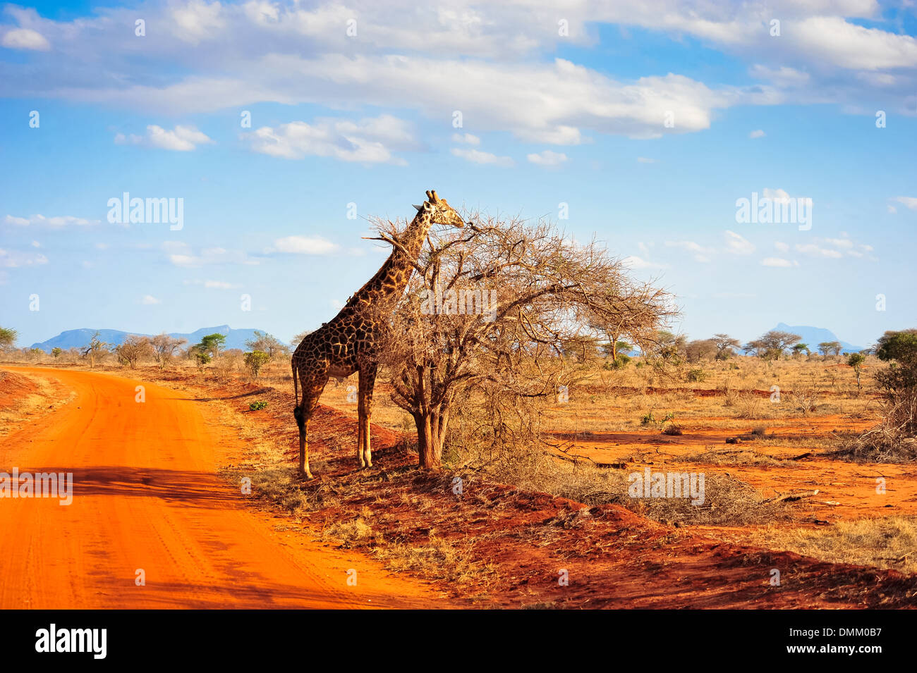 Afrika Natur ein fest für die Augen Stockbild