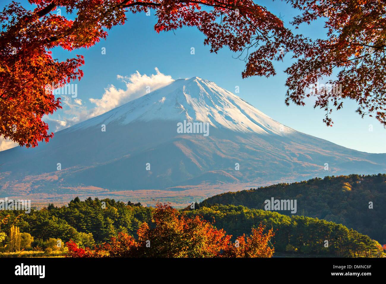 Mt. Fuji mit Herbst Laub in Japan. Stockfoto
