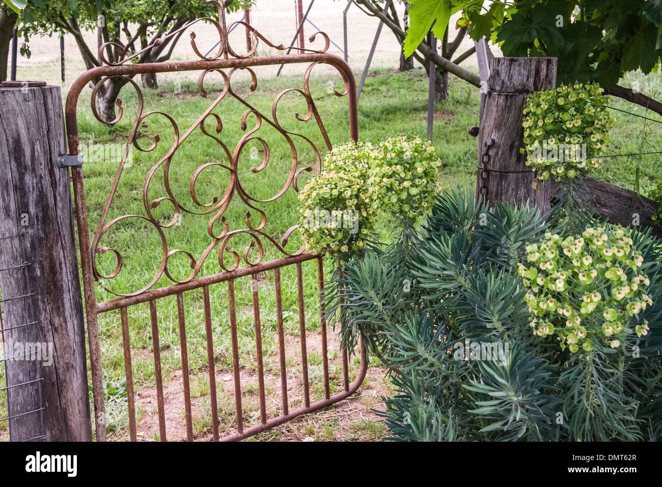 altes gartentor eisen auf bauernhof mit kräutern zu obstgarten