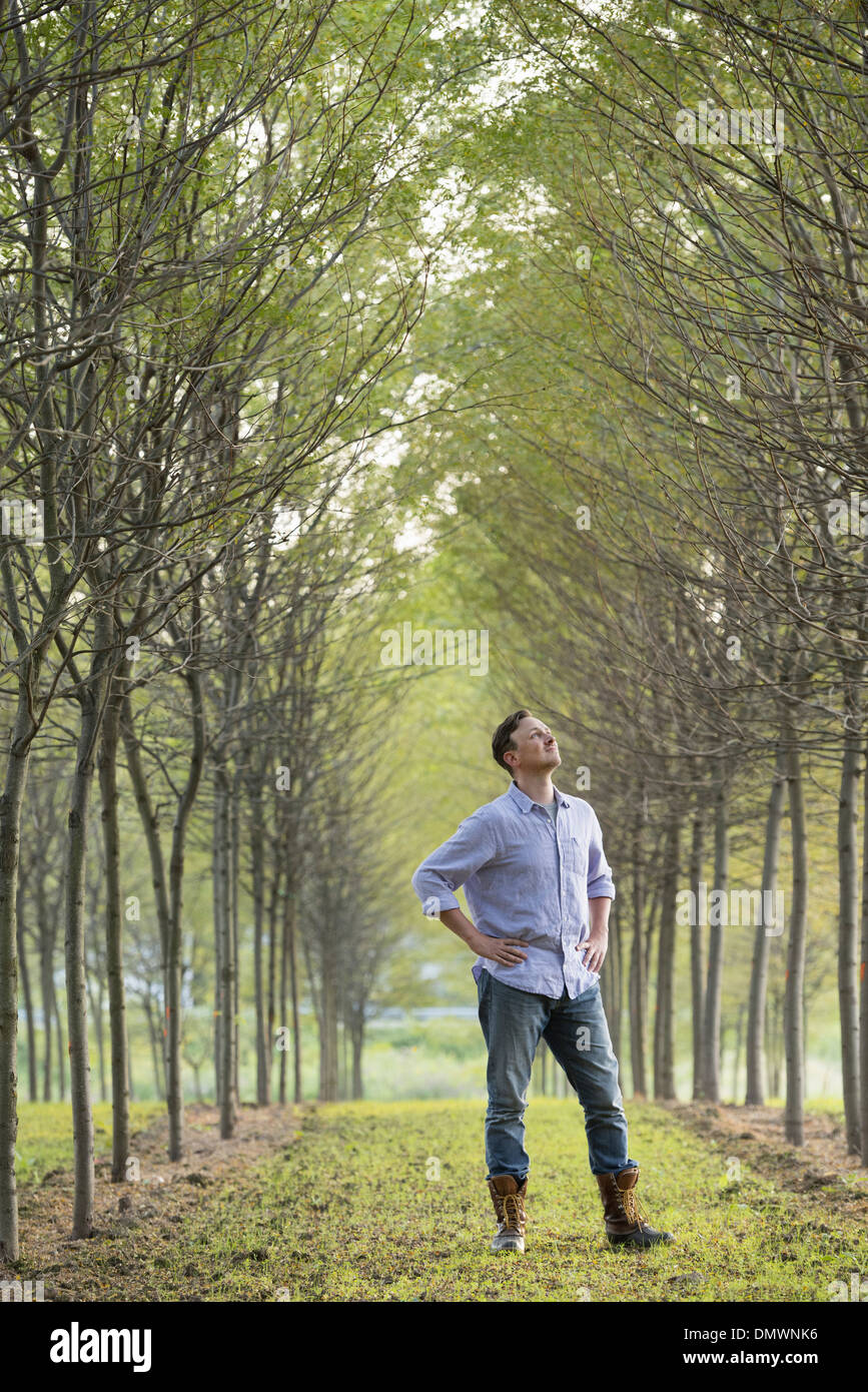 Ein Mann in eine Allee von Bäumen, die auf der Suche nach oben. Stockbild