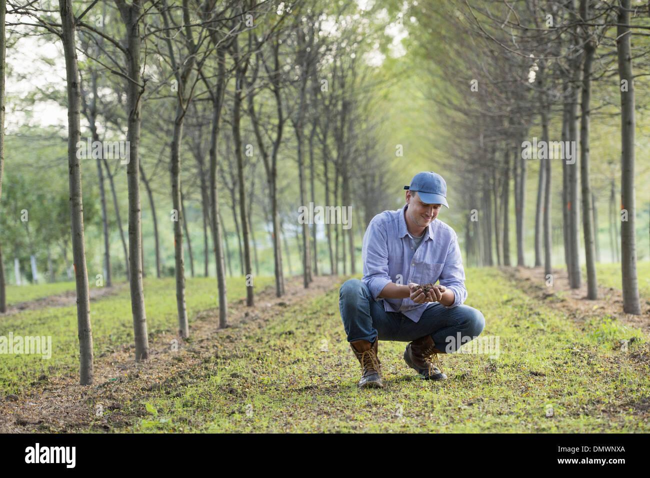 Ein Mann hocken und eine Handvoll Erde untersuchen. Stockbild