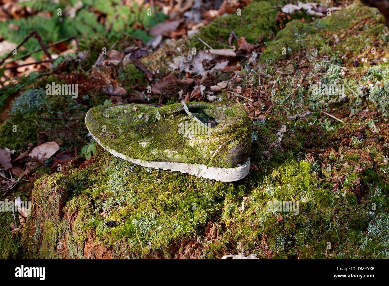 Moos wächst auf einem verlassenen Schuh. Stockfoto
