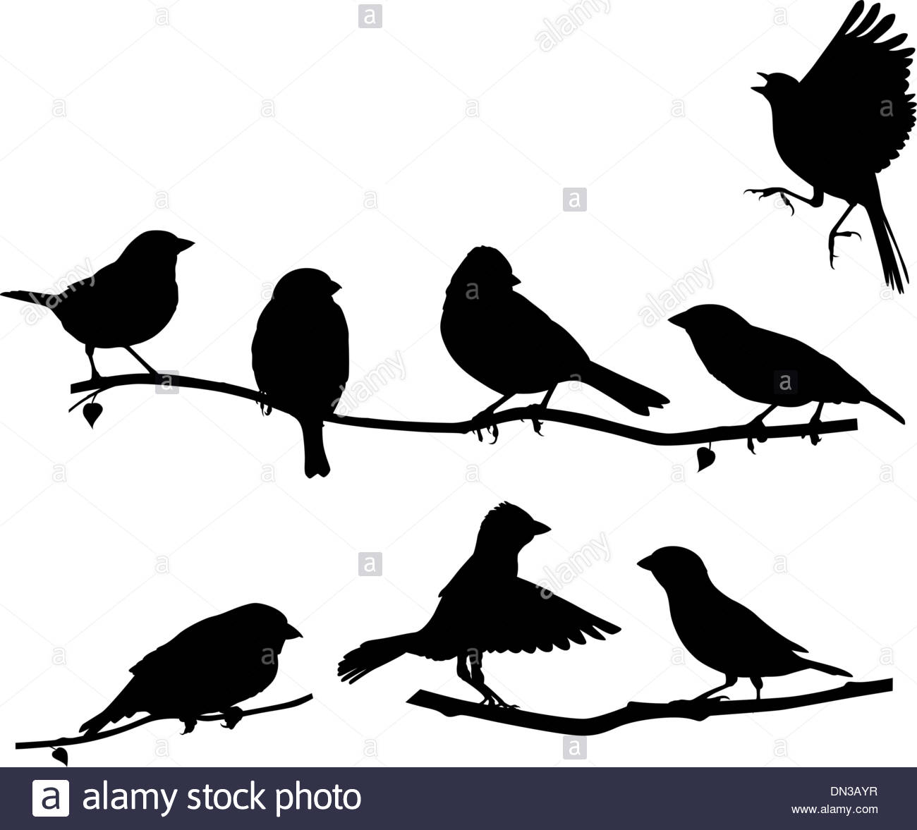 vector silhouette bird on branch stockfotos vector silhouette bird on branch bilder alamy. Black Bedroom Furniture Sets. Home Design Ideas