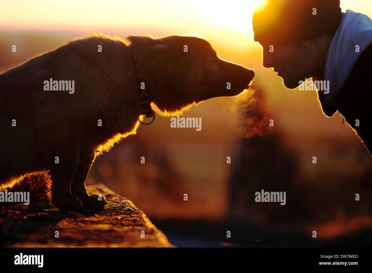 Mensch und Hund bei Gegenlicht schauen einander Stockbild