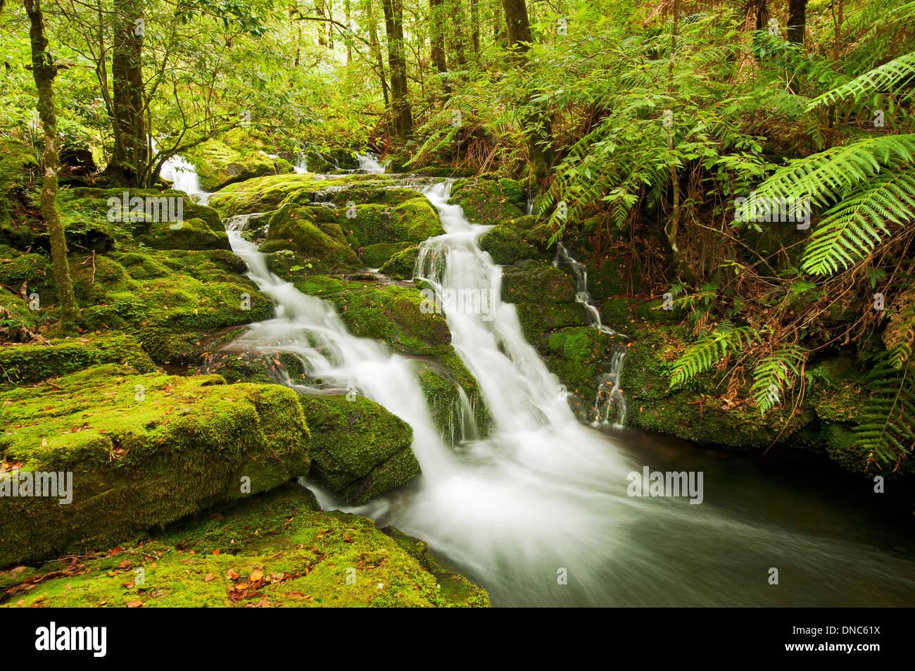 Kleiner Bach, der durch subtropischen Regenwald. Stockbild