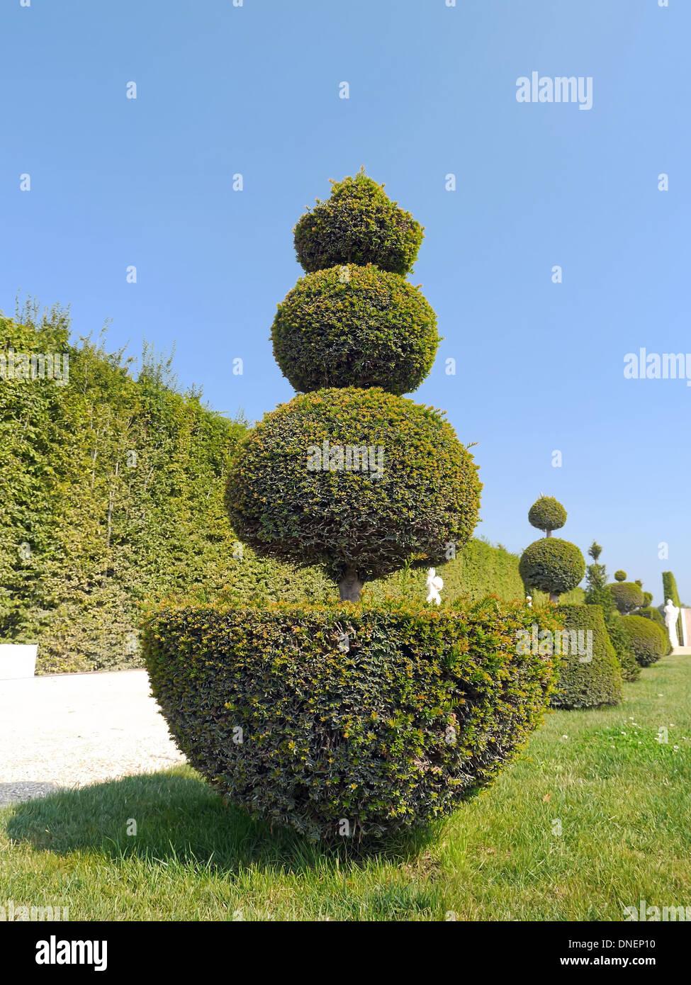 Gasse Mit Schönen Immergrünen Getrimmten Sträucher Gefunden Im Garten Von  Versailles, Frankreich Stockbild