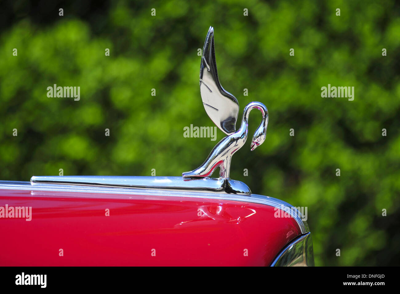 Packard Kühlerfigur, Oldtimer, Schwan Stockbild
