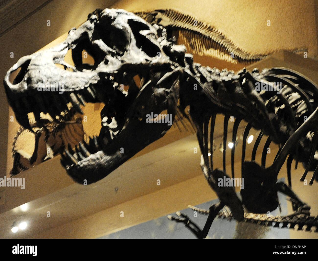 Tarbosaurus-Schädel und Skelett des Predator Dinosaurier ...