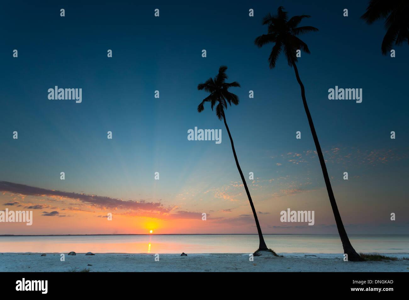 Palmen und Strand bei Sonnenuntergang in Sansibar, Tansania Stockbild