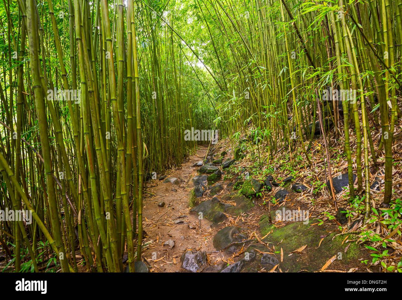 Der Magische Bambus Wald Maui In Der Nahe Von Na Ili Ili Haele Auf