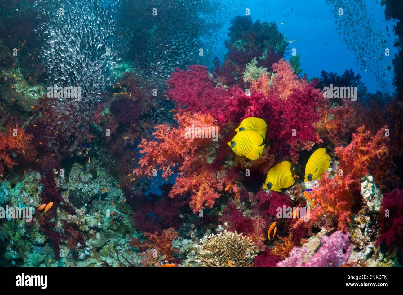Korallenriff-Landschaft mit goldenen butterflyfish Stockbild