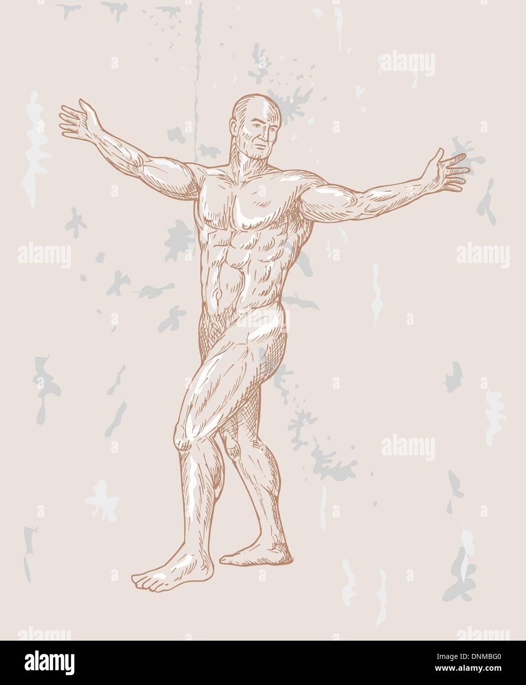 die Hand skizzierte Darstellung der männlichen menschlichen Anatomie ...