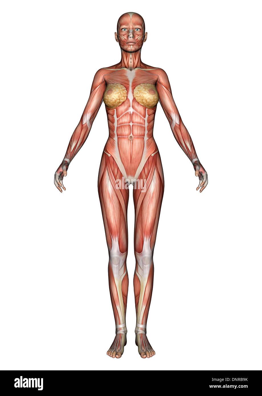 Ziemlich Anatomie Und Physiologie Modul 1 Ideen - Physiologie Von ...