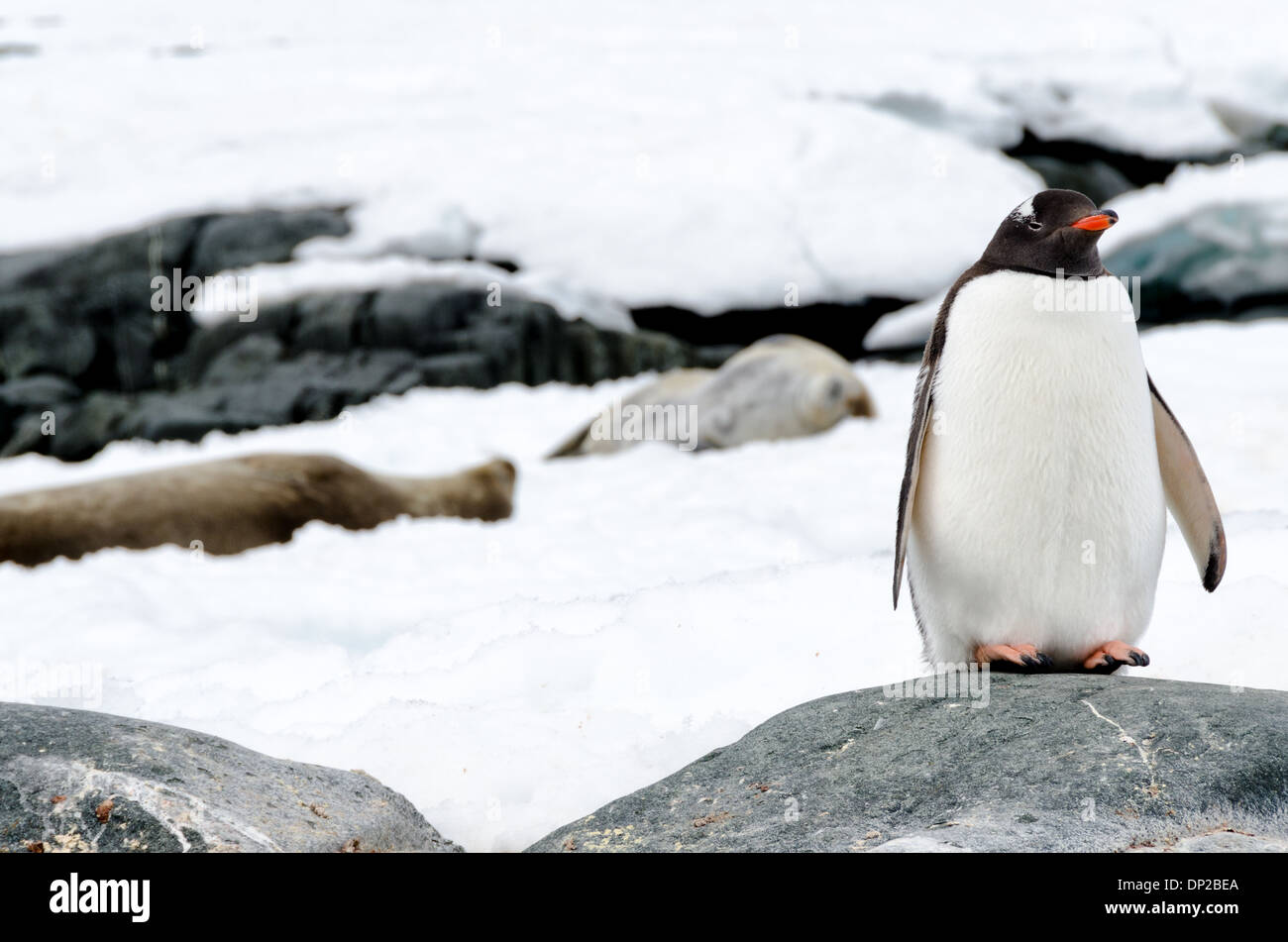 1/2011 Info Naturschutz - Fachdokumente Online